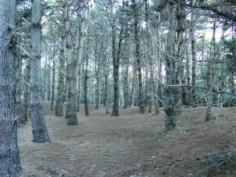 bosque de Costa del Este